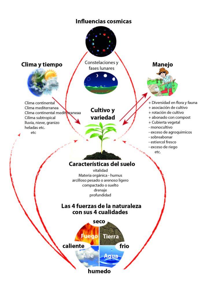 Esquema factores de salud vegetal-01